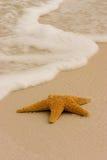 Starfish na praia Fotografia de Stock Royalty Free