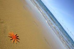 Starfish na praia Fotografia de Stock
