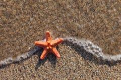 Starfish na praia da areia do mar Fotografia de Stock