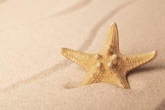 Starfish na praia de Sandy imagens de stock