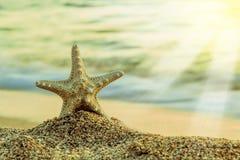 Starfish na praia tropical Imagem de Stock