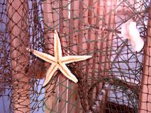 Starfish on net. Starfish hanging from a fishnet Stock Images