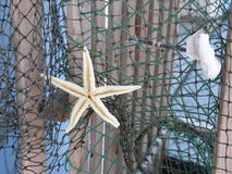 Starfish on net. A starfish and a shell on a fishing net Stock Photo