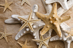 Starfish no papel velho Fotografia de Stock Royalty Free