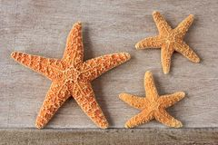 Starfish from the North Sea Stock Image