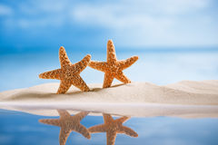 Starfish  with ocean , beach, seascape and reflection Stock Photos