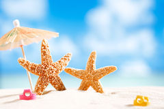 Starfish  with ocean , beach and seascape Royalty Free Stock Images