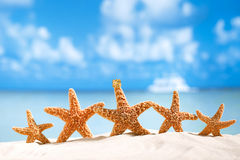 Starfish  with ocean , beach and seascape Stock Photos