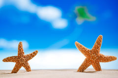 Starfish  with ocean , beach and seascape Royalty Free Stock Photo