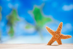 Starfish  with  ocean , beach and seascape Stock Photography