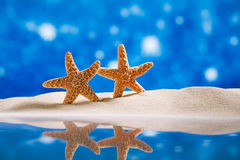 Starfish  with ocean , beach and seascape Stock Images