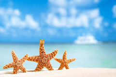 Starfish  with ocean , beach and seascape Royalty Free Stock Photos