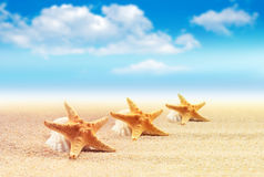 Starfish  with ocean , beach and seascape Royalty Free Stock Photography