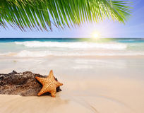 Starfish with ocean . Stock Image
