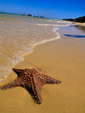 Starfish in the ocean surf Royalty Free Stock Images