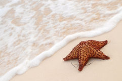 Starfish and ocean wave Royalty Free Stock Image