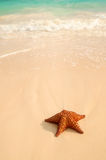 Starfish and ocean wave Royalty Free Stock Images