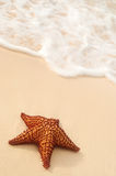Starfish and ocean wave Stock Images