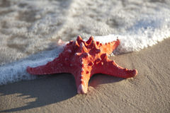 Free Starfish On Sand Royalty Free Stock Images - 11247239