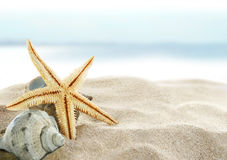 Starfish On The Beach Royalty Free Stock Photography