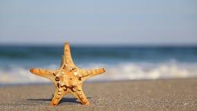 Starfish. One starfish alone on the beach stock video