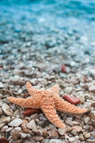 Starfish. Orange Starfish on the beach at Croatia Royalty Free Stock Photography