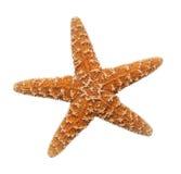 Starfish. Orange Ocean Starfish Isolated on White Background Royalty Free Stock Photography