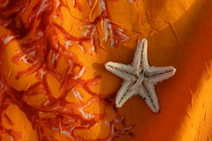 Starfish. Is on an orange stole Stock Photography