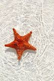 Starfish orange in wavy shallow water Stock Images