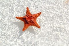 Starfish orange in wavy shallow water. Beautiful starfish orange in wavy shallow water Royalty Free Stock Photo