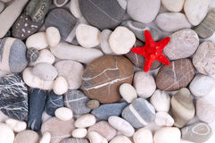 Starfish over pebbles Stock Photos