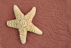 Starfish over red sand. Useful as background Royalty Free Stock Images
