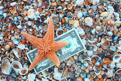 Starfish over two dollar banknote on coast covered with seashell Royalty Free Stock Image