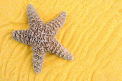 Starfish over yellow sand. Useful as background Stock Image