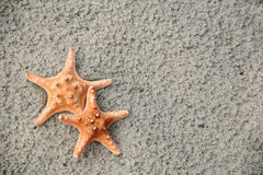 Starfish Pair. Two starfish on a sandy beach with copy space. Vacation concept stock images