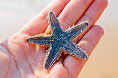 Starfish in the palm. Starfish, beach of the Indian ocean, GOA Stock Photos