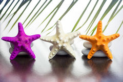 Starfish and palm fronds Stock Photos