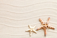 Starfish and palm leaves lying on the sea sand . There is a place for labels. Royalty Free Stock Images