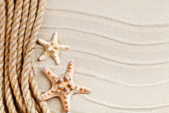 Starfish and palm leaves lying on the sea sand . There is a place for labels. Stock Images