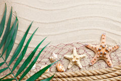 Starfish and palm leaves lying on the sea sand . There is a place for labels. Royalty Free Stock Photo