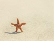 Starfish Pazifischer Seestern (Asterias-amurensis Lizenzfreie Stockbilder