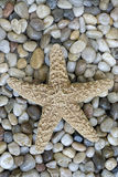 Starfish on pebble Stock Photos