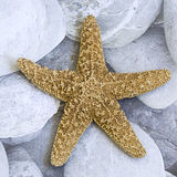Starfish on pebble Royalty Free Stock Photos