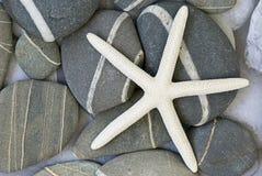 Starfish on pebble Stock Photography