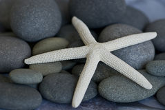 Starfish on pebble Royalty Free Stock Photo