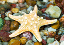 Starfish on pebble Stock Image