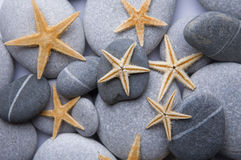 Starfish and Pebble Background Stock Images