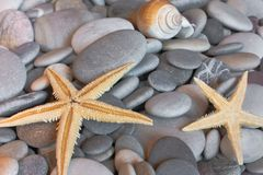 Starfish on pebbles Stock Photography