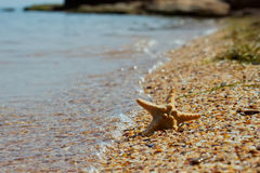 Starfish on pebbles in the wave Royalty Free Stock Photos