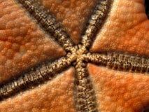 Starfish in Philippinen Lizenzfreies Stockbild